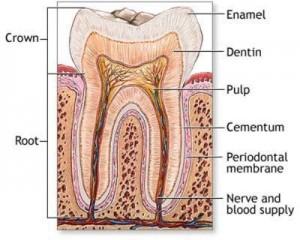 parodontologie-ploiesti